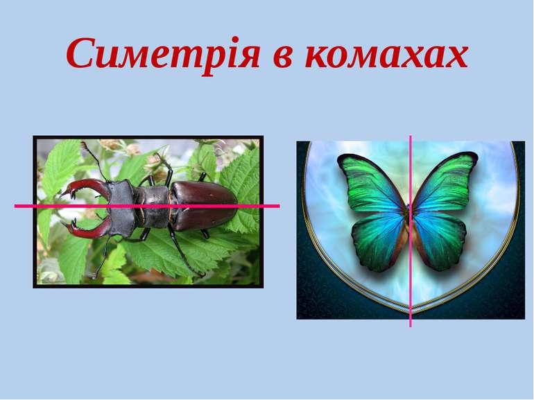 Симетрія в комахах