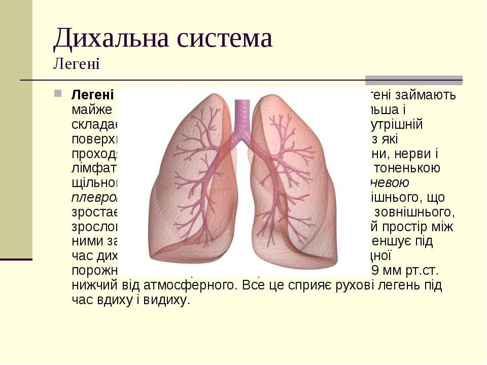Дихальна система Легені Легені- це великі парні органи. Ліва і права легені ...
