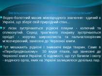 Водно-болотний масив міжнародного значення– єдиний в Україні, що зберіг свій ...