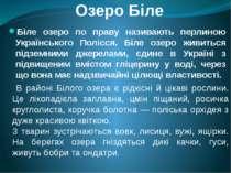 Озеро Біле Біле озеро по праву називають перлиною Українського Полісся. Біле ...
