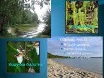 Коручка болотна Лікопадієла