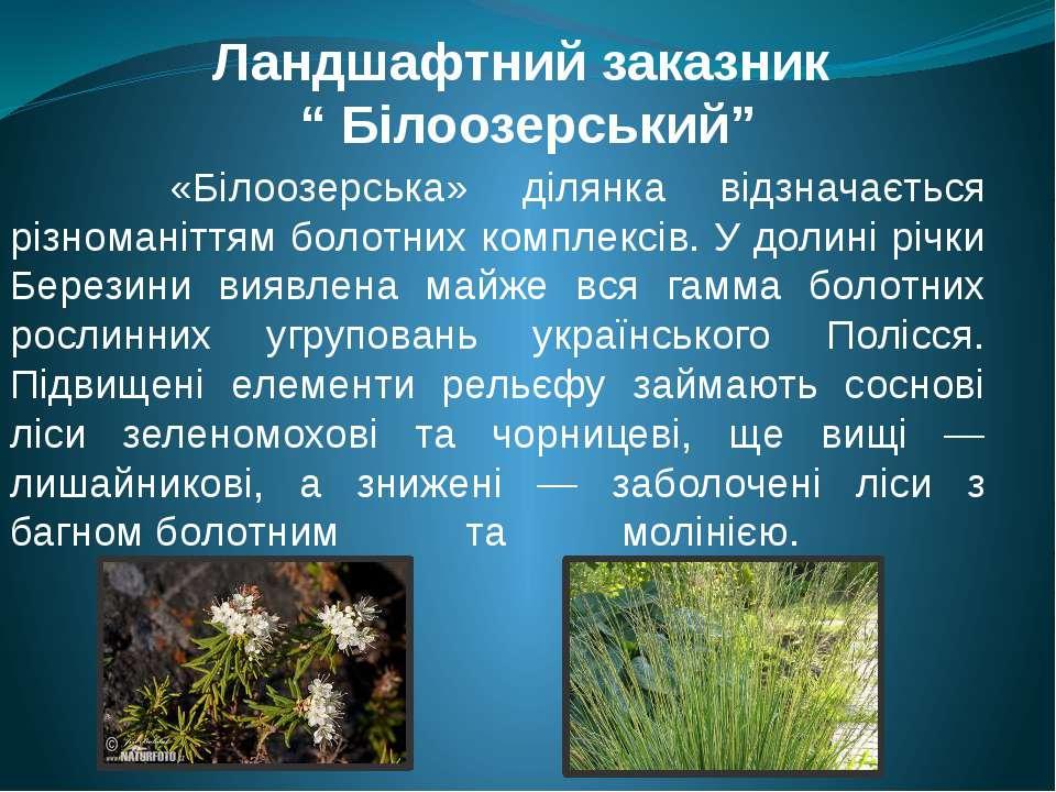 """Ландшафтний заказник """" Білоозерський"""" «Білоозерська» ділянка відзначається рі..."""