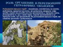 Руйнування гірських порід – лишайники, оселяючись на скелях, виділяють органі...