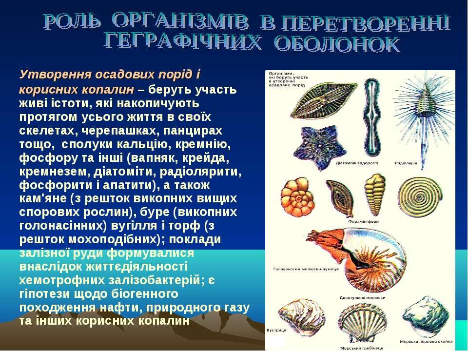 Утворення осадових порід і корисних копалин – беруть участь живі істоти, які ...