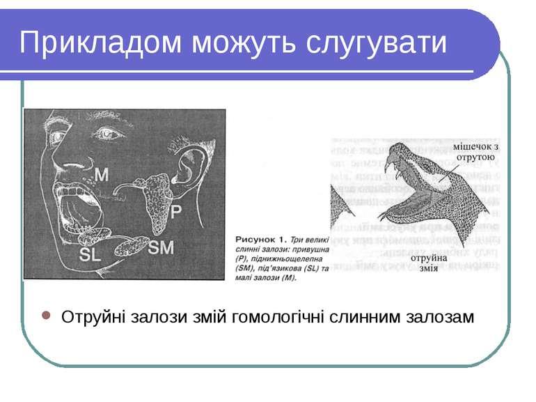 Прикладом можуть слугувати Отруйні залози змій гомологічні слинним залозам