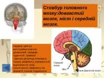 В цьому місці основні нервові шляхи, що виходять із спинного мозку, перехрещу...