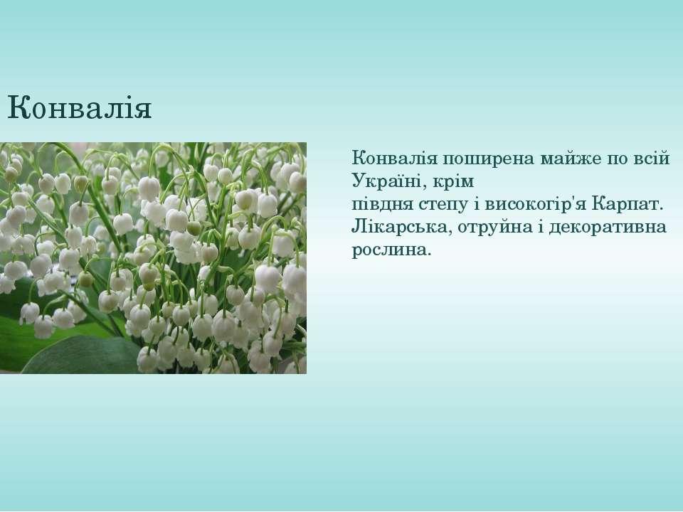 Конвалія Конвалія поширена майже по всій Україні, крім півднястепуівисоког...