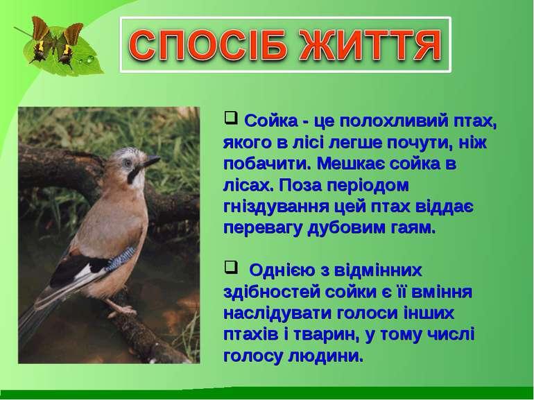 Сойка - це полохливий птах, якого в лісі легше почути, ніж побачити. Мешкає с...