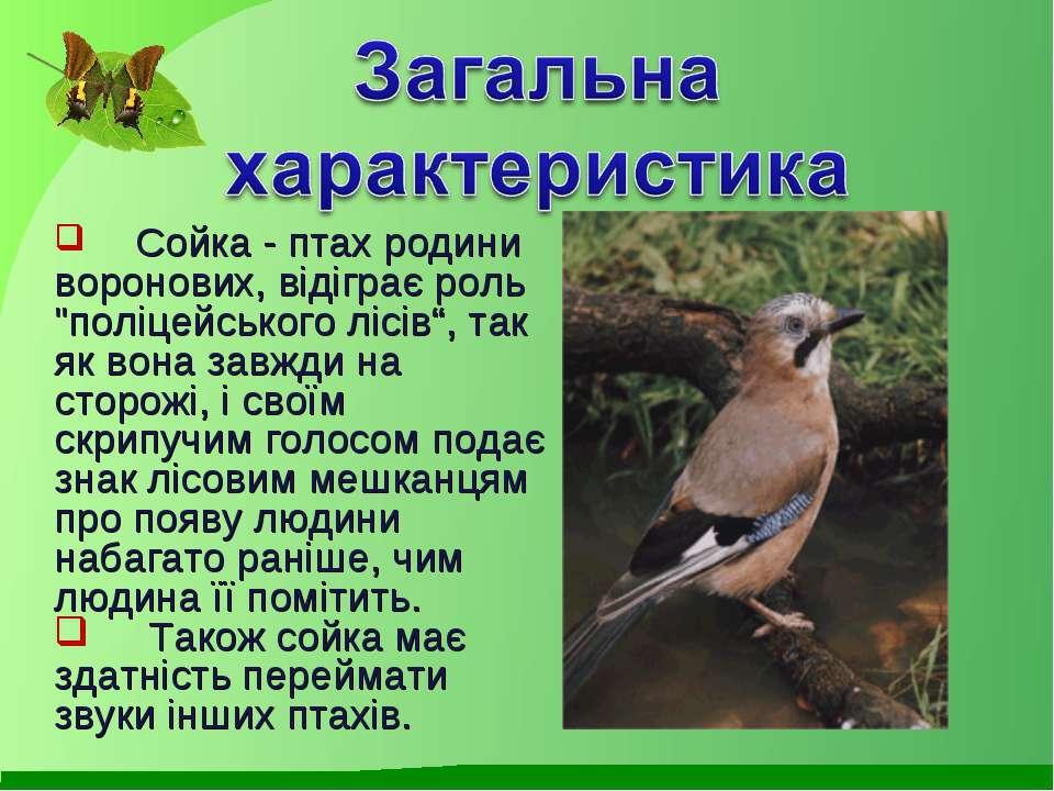 """Сойка - птах родини воронових, відіграє роль """"поліцейського лісів"""", так як во..."""