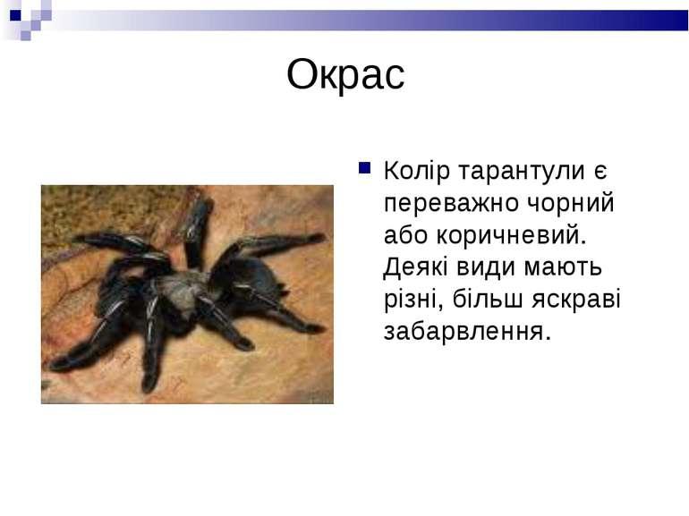 Окрас Колір тарантули є переважно чорний або коричневий. Деякі види мають різ...