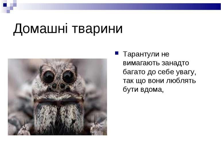 Домашні тварини Тарантули не вимагають занадто багато до себе увагу, так що в...