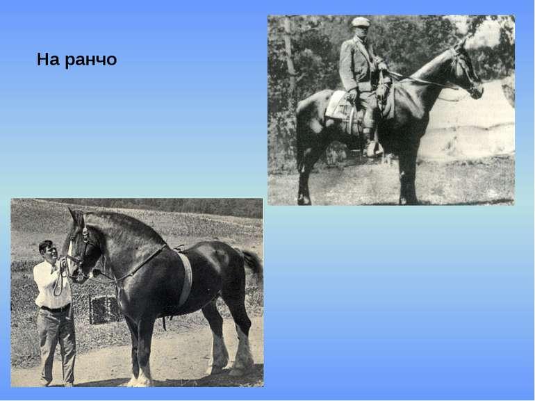 На ранчо