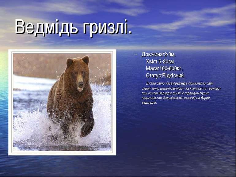 Ведмідь гризлі. Довжина:2-3м. Хвіст:5-20см. Маса:100-800кг. Статус:Рідкісний....