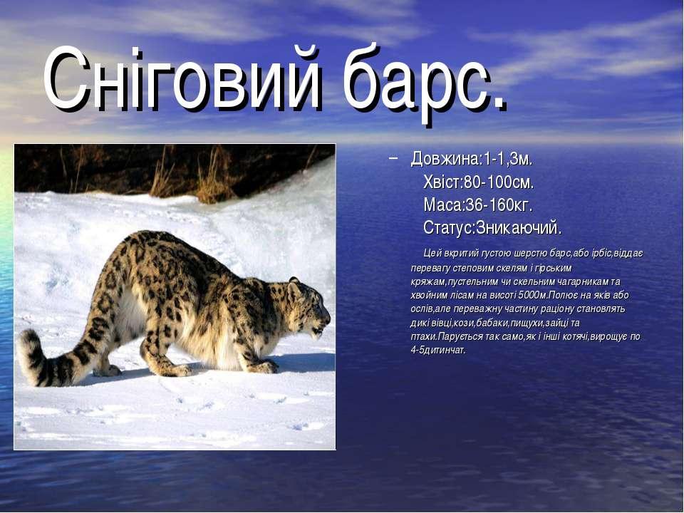 Сніговий барс. Довжина:1-1,3м. Хвіст:80-100см. Маса:36-160кг. Статус:Зникаючи...