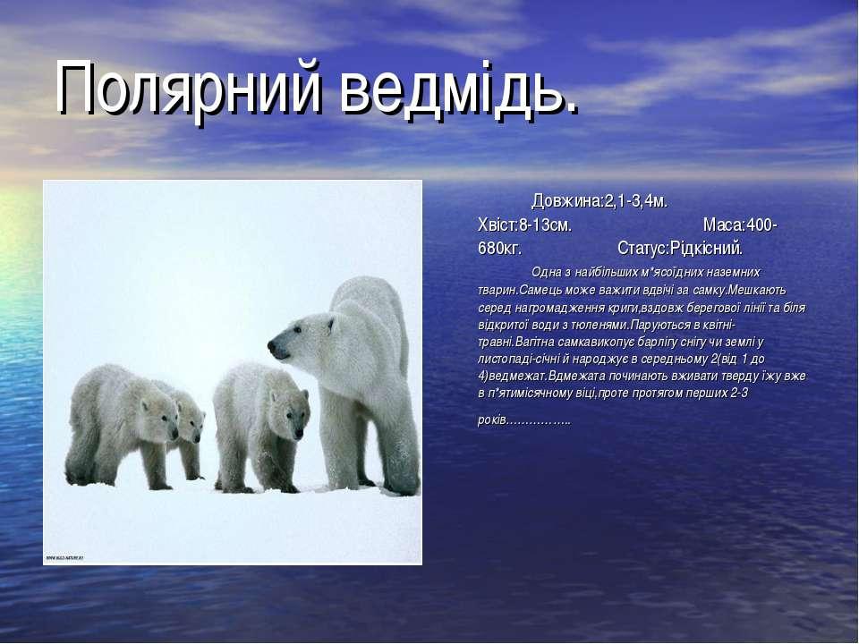 Полярний ведмідь. Довжина:2,1-3,4м. Хвіст:8-13см. Маса:400-680кг. Статус:Рідк...
