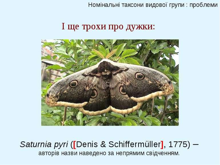Номінальні таксони видової групи : проблеми І ще трохи про дужки: Saturnia py...