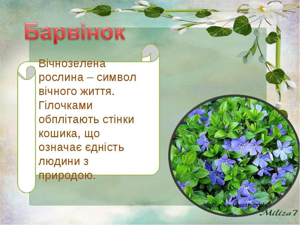 Вічнозелена рослина – символ вічного життя. Гілочками обплітають стінки кошик...