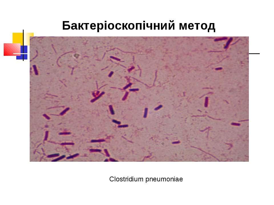 Бактеріоскопічний метод Clostridium pneumoniae