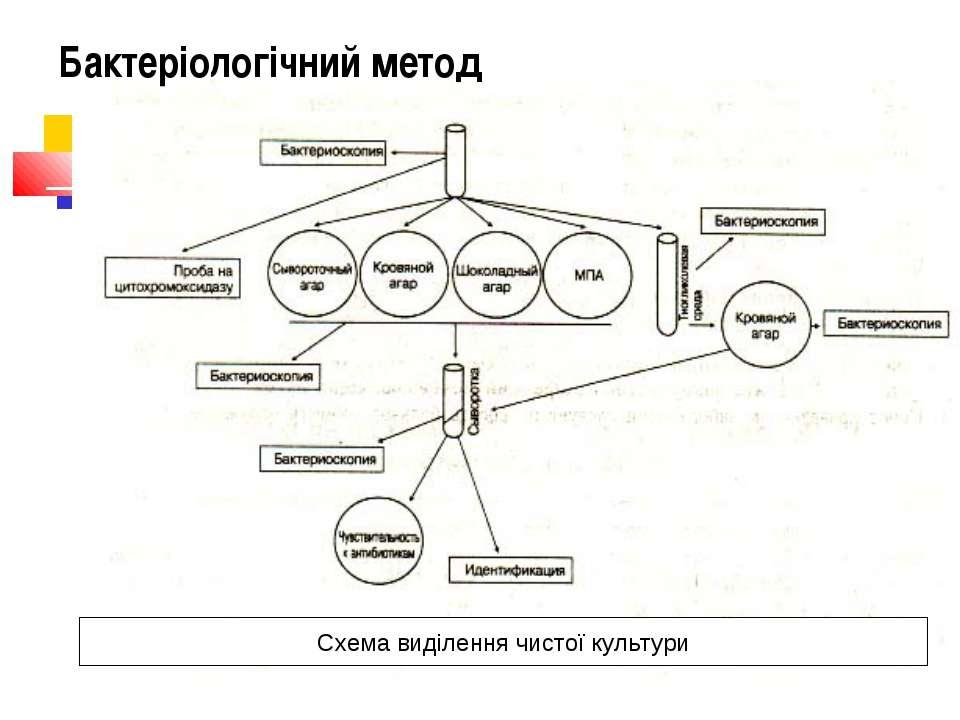 Cхема виділення чистої культури Бактеріологічний метод