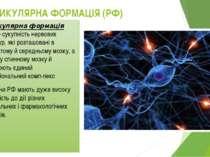 РЕТИКУЛЯРНА ФОРМАЦІЯ (РФ) Ретикулярна формація (РФ)— сукупність нервових стру...