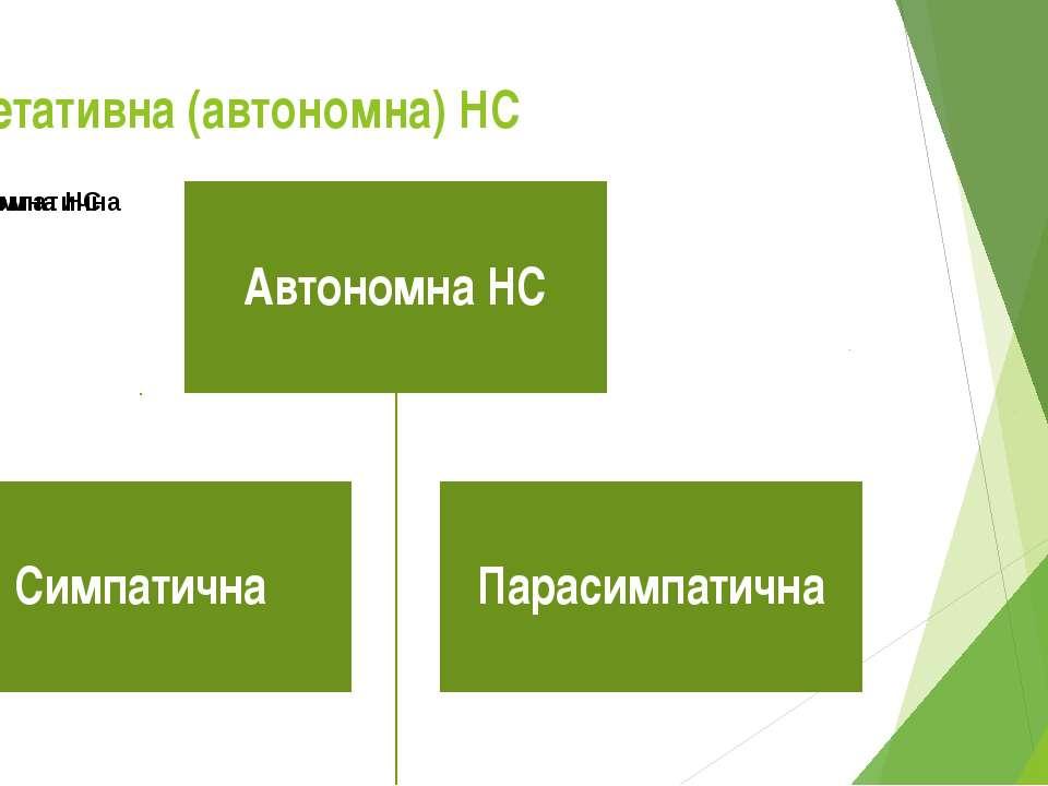 Вегетативна (автономна) НС