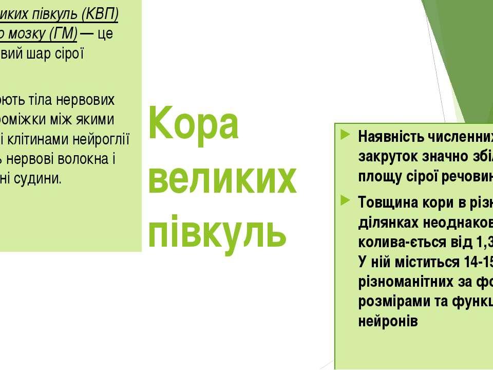 Кора великих півкуль Кора великих півкуль (КВП) головного мозку (ГМ) — це пов...