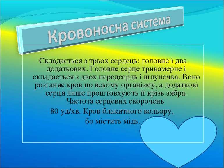 Складається з трьох сердець: головне і два додаткових. Головне серце трикамер...
