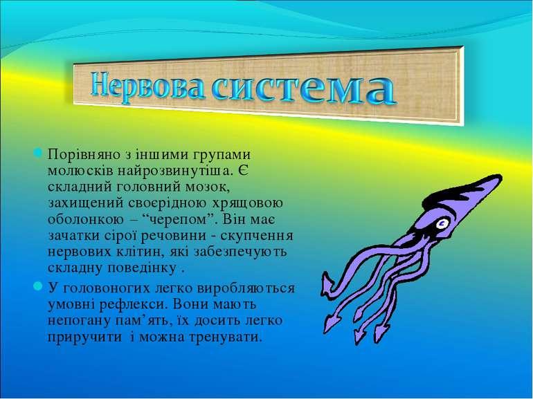 Порівняно з іншими групами молюсків найрозвинутіша. Є складний головний мозок...