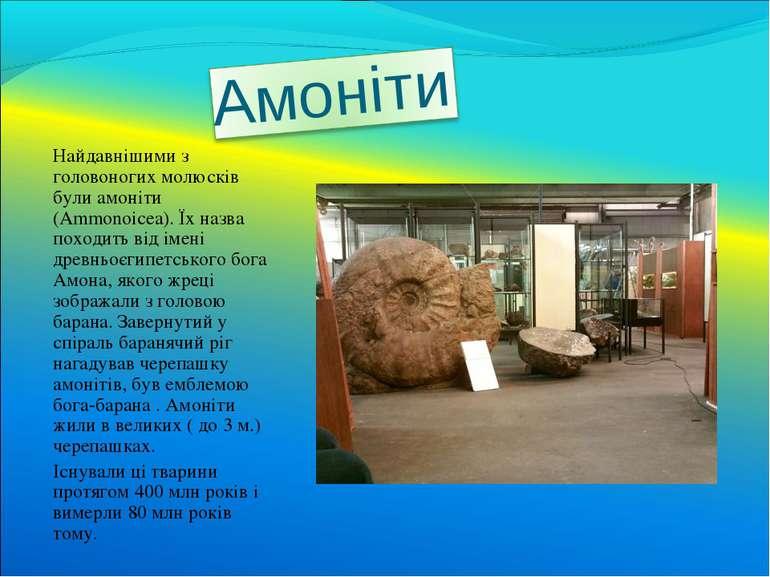 Найдавнішими з головоногих молюсків були амоніти (Ammonoicea). Їх назва поход...