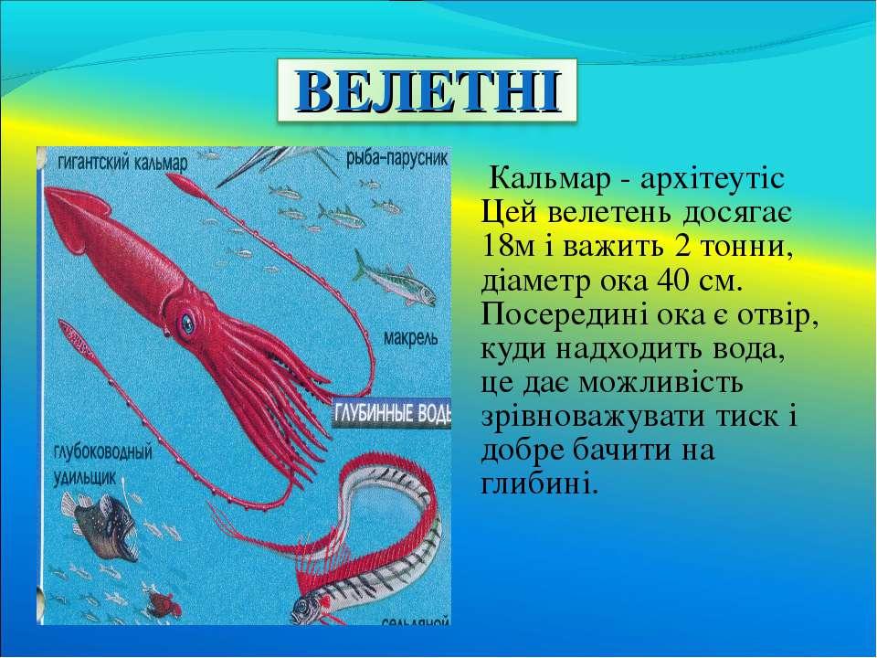 Кальмар - архітеутіс Цей велетень досягає 18м і важить 2 тонни, діаметр ока 4...
