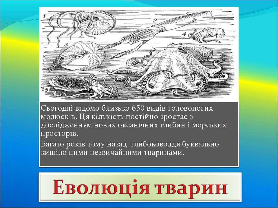 Сьогодні відомо близько 650 видів головоногих молюсків. Ця кількість постійно...