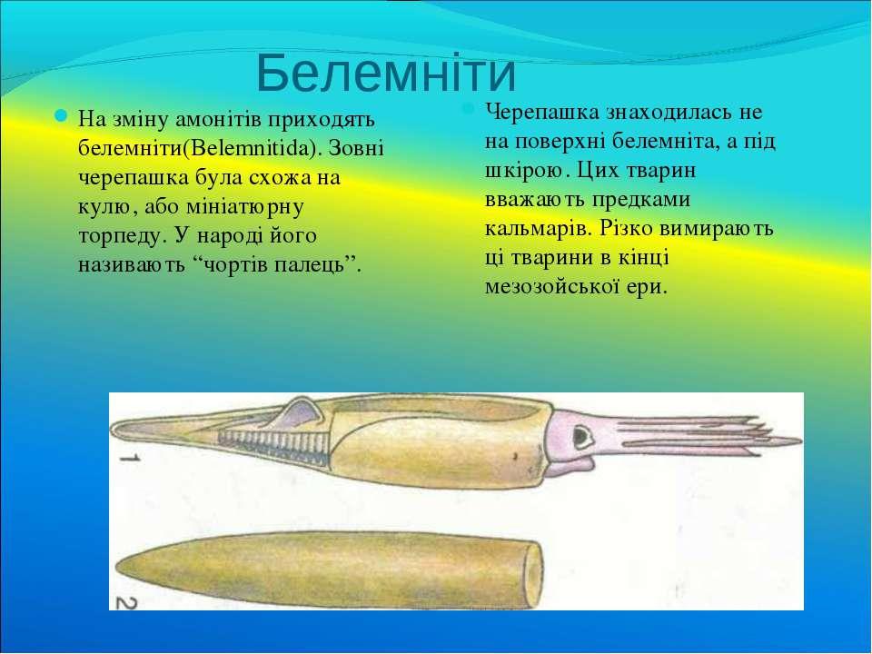 Белемніти На зміну амонітів приходять белемніти(Belemnitida). Зовні черепашка...