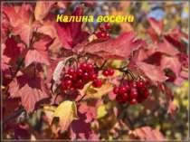 Калина восени