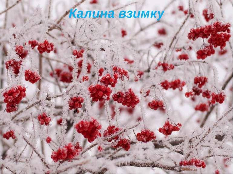 Калина взимку