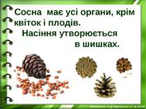 Сосна має усі органи, крім квіток і плодів. Насіння утворюється в шишках. Біл...