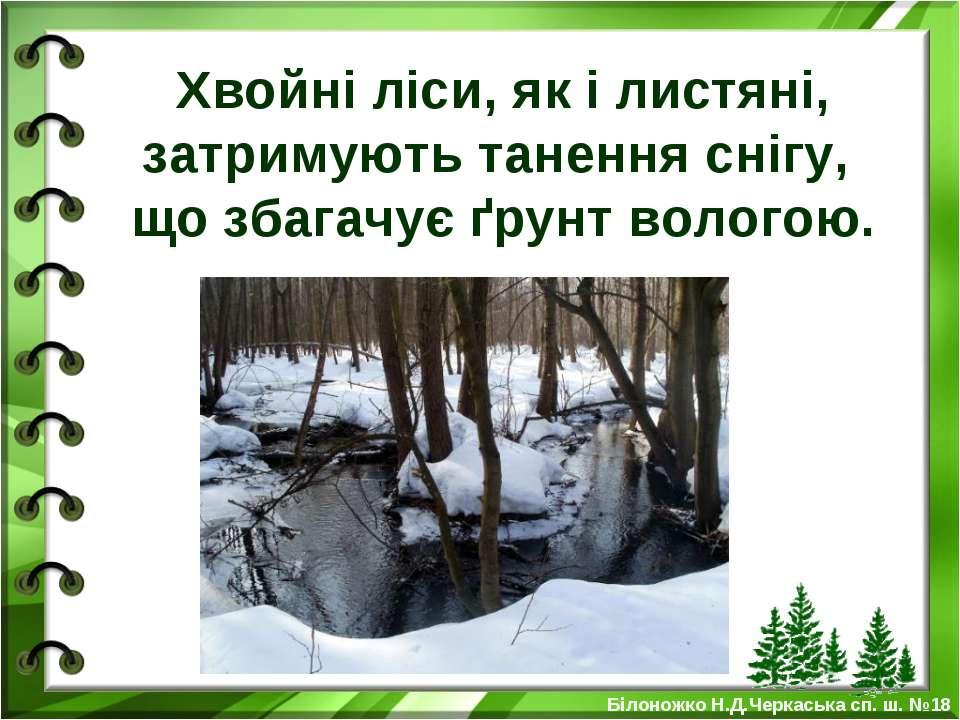 Хвойні ліси, як і листяні, затримують танення снігу, що збагачує ґрунт волого...