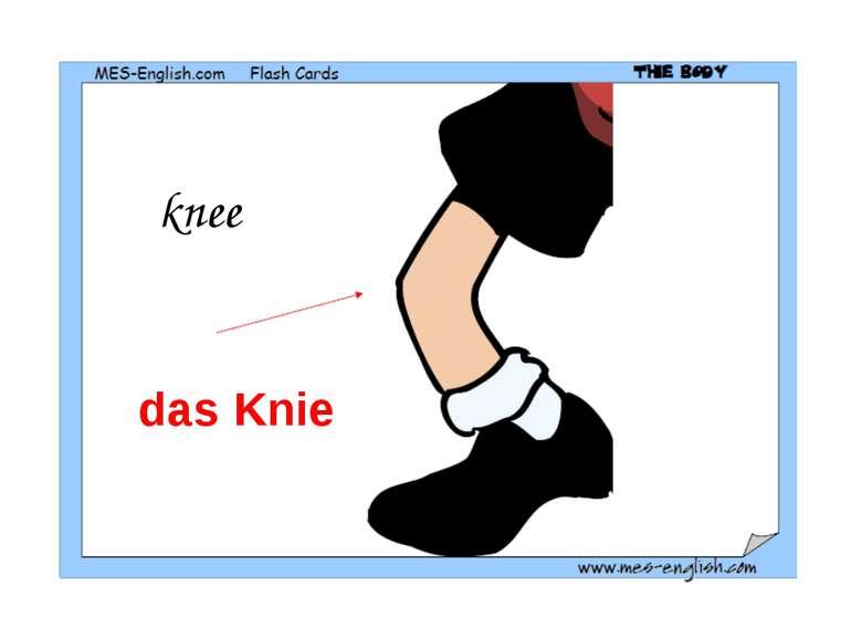 knee das Knie