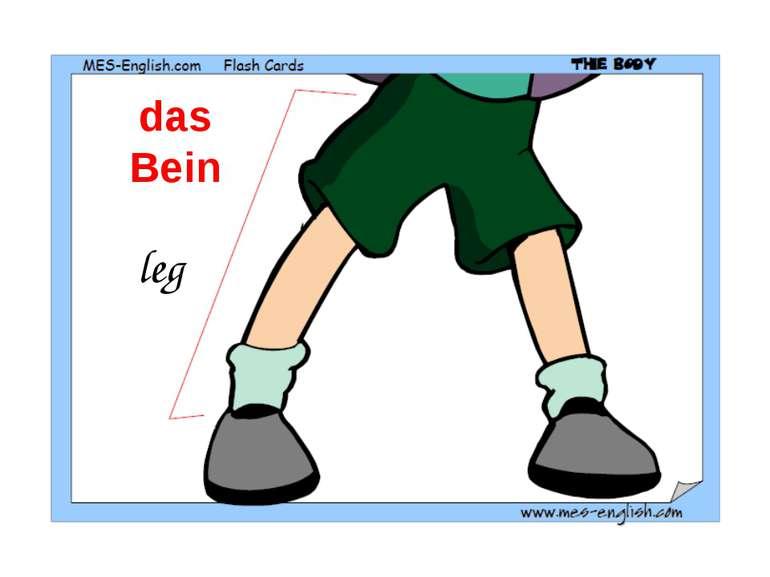 leg das Bein