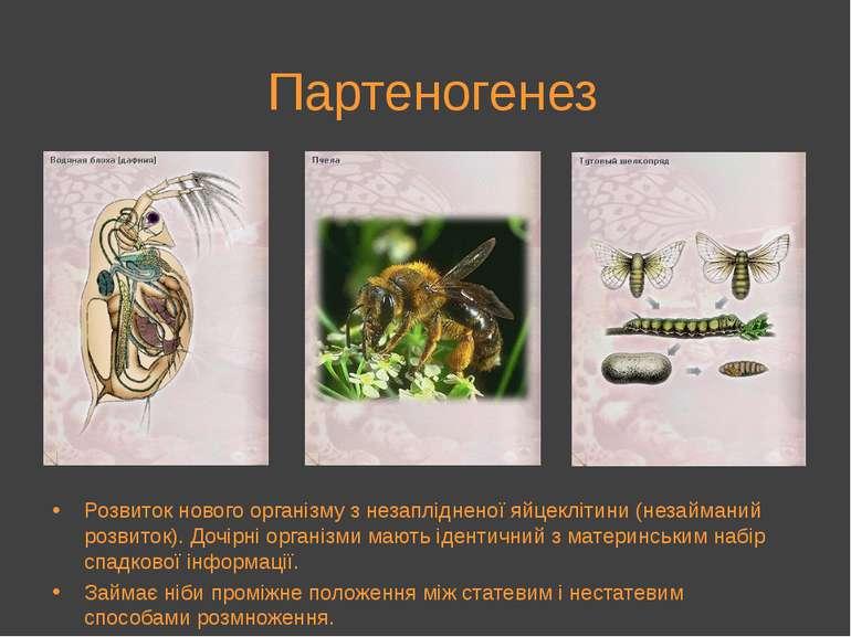 Партеногенез Розвиток нового організму з незаплідненої яйцеклітини (незаймани...