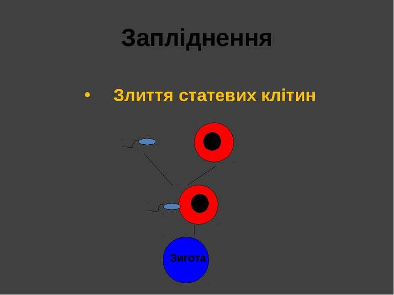 Запліднення Злиття статевих клітин Зигота