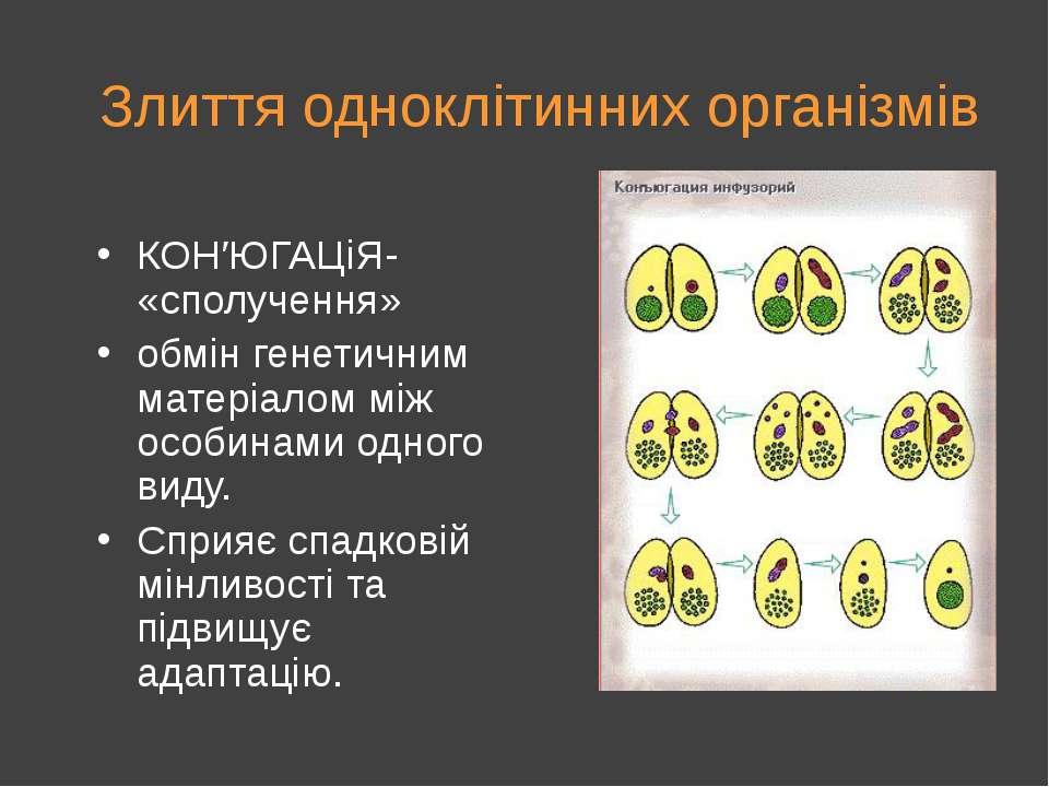 Злиття одноклітинних організмів КОН′ЮГАЦіЯ- «сполучення» обмін генетичним мат...