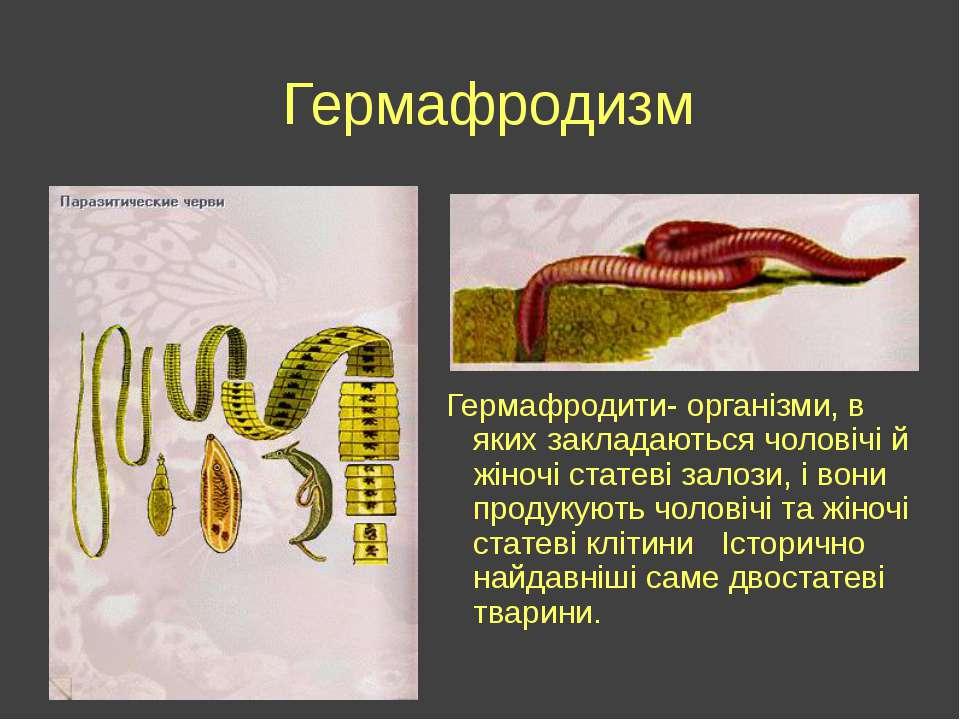 Гермафродизм Гермафродити- організми, в яких закладаються чоловічі й жіночі с...