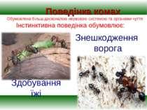 Здобування їжі Поведінка комах Обумовлена більш досконалою нервовою системою ...
