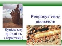 Будівельну діяльність (Термітник ) Репродуктивну діяльність