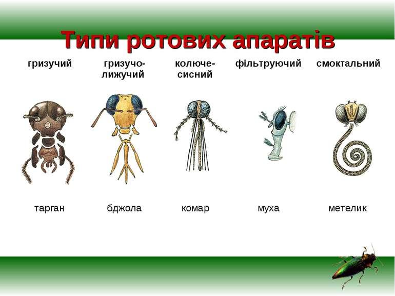 Типи ротових апаратів гризучий гризучо-лижучий колюче-сисний фільтруючий смок...