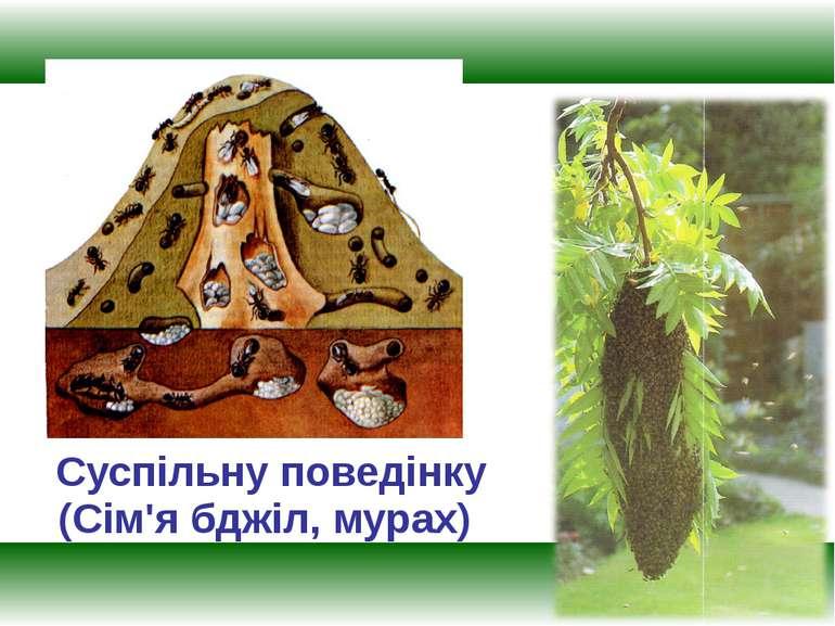 Суспільну поведінку (Сім'я бджіл, мурах)