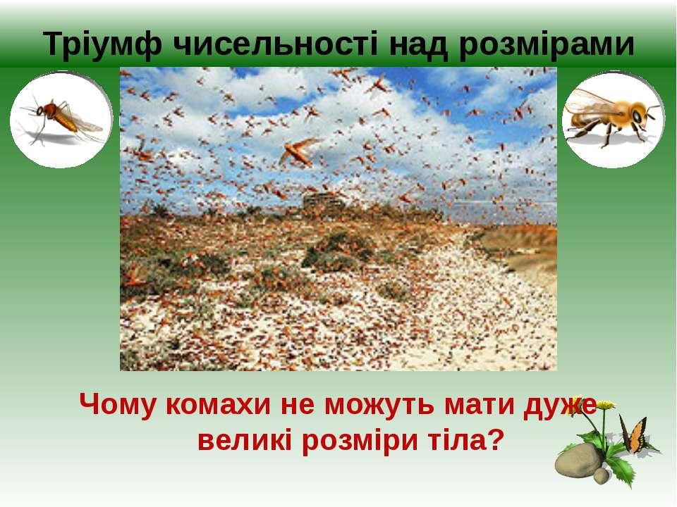 Тріумф чисельності над розмірами Чому комахи не можуть мати дуже великі розмі...