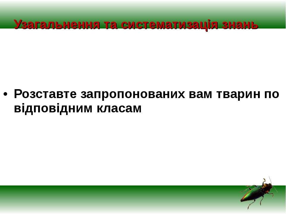 Узагальнення та систематизація знань Розставте запропонованих вам тварин по в...