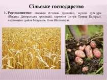 Сільське господарство Рослинництво: пшениця (Степові провінції), зернові куль...