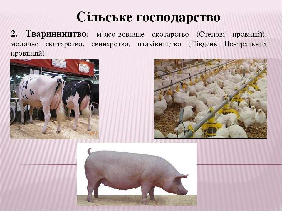 Сільське господарство 2. Тваринництво: м'ясо-вовняне скотарство (Степові пров...